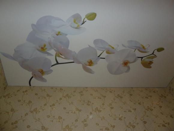 Белые орхидеи на матовом полотне